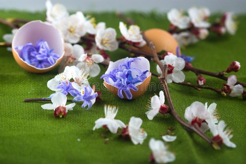 Äggskalet med blått blommar och blomningfilialer royaltyfria foton
