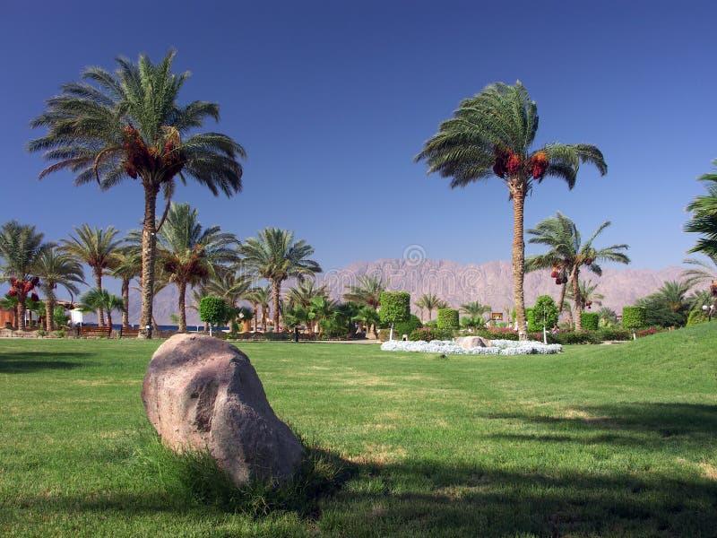 Ägypten - Palmengarten lizenzfreie stockfotos