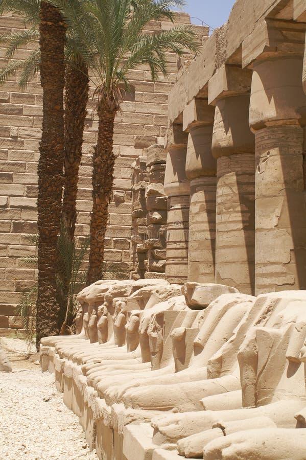 Ägypten-RAM stockfotos