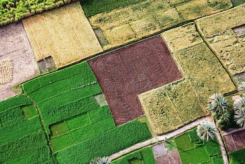 Ägyptische Felder lizenzfreies stockbild