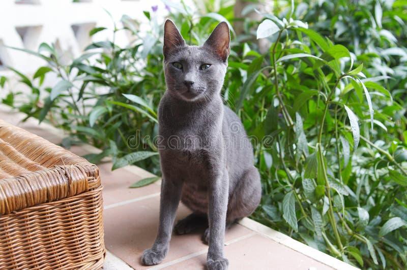 Ägyptische Katze stockfotografie