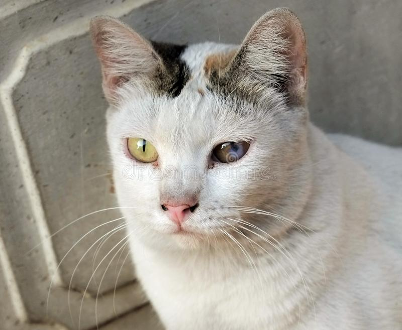 Äldre kattögon börjar att försämras royaltyfri fotografi