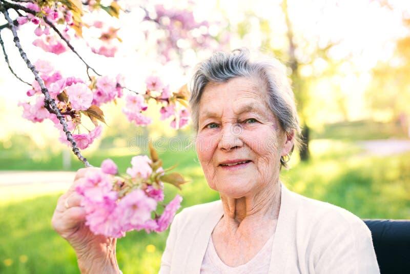 Äldre kvinna i rullstol i vårnatur royaltyfria bilder
