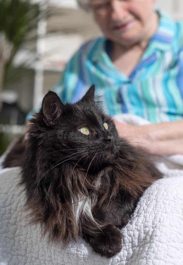 Äldre kvinna med hennes husdjur royaltyfri fotografi