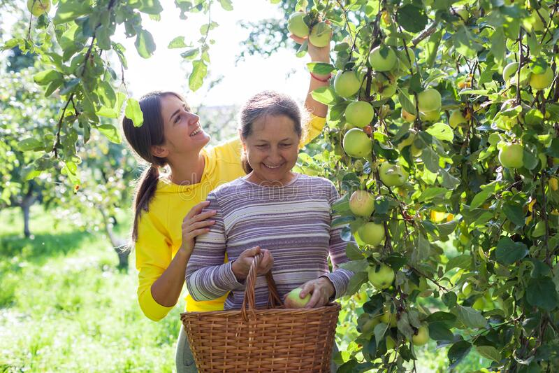 Äldre kvinna med vuxen dotter i äppelfruktodling arkivfoton
