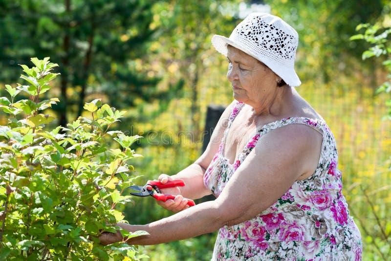 Äldre kvinna som beskär buskar med pruner royaltyfri foto