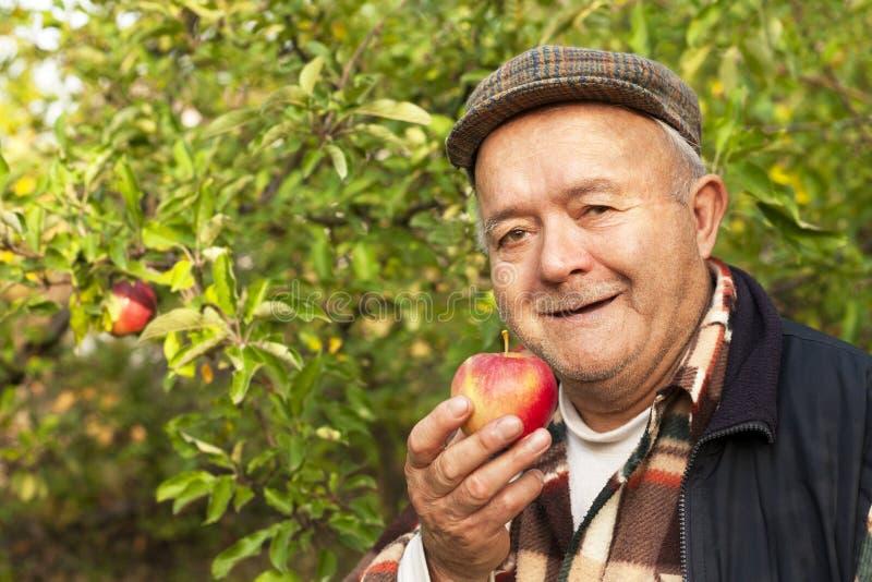 äldre man i fruktträdgården royaltyfri foto