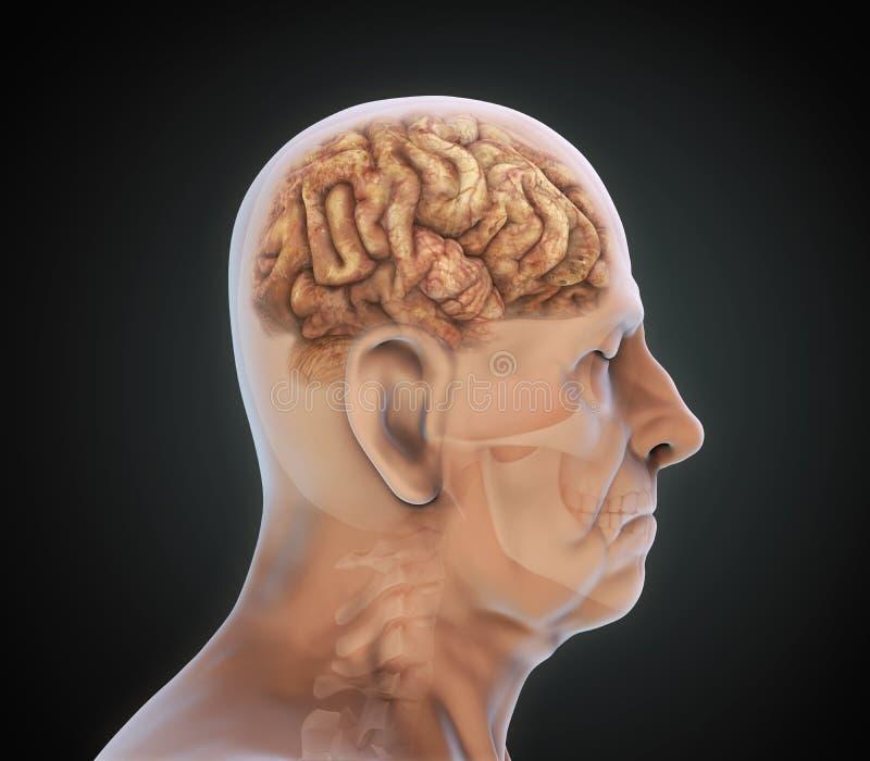 Äldre man med den sjukliga hjärnan royaltyfri illustrationer