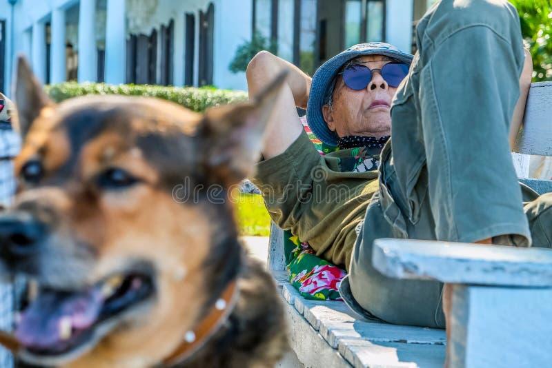 Äldre man med en hund arkivfoton