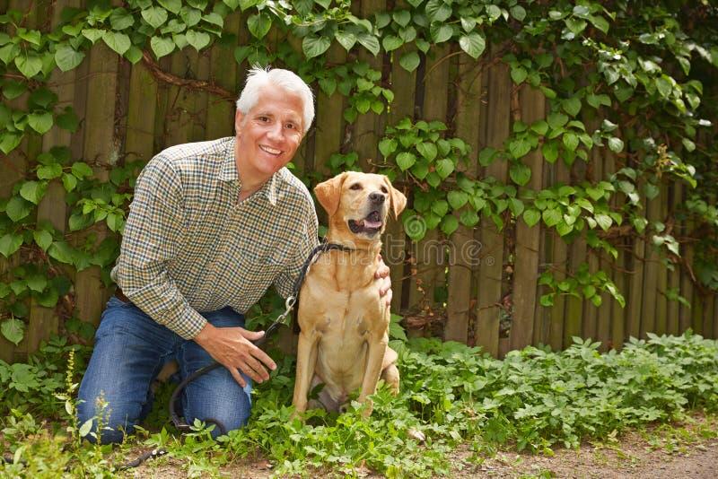 Äldre man med labrador retriever i trädgård arkivbilder