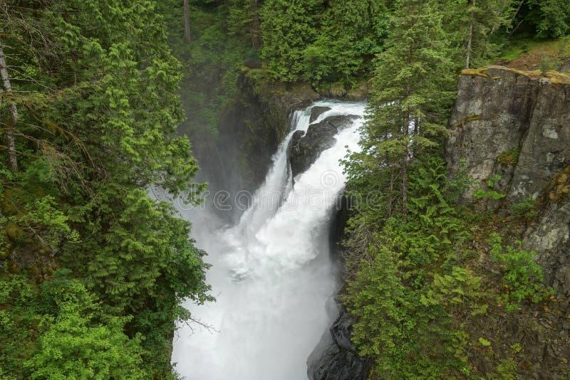 Älgen faller provinsiellt parkerar rainforesten och vattenfallet för den Vancouver ön den frodiga fotografering för bildbyråer