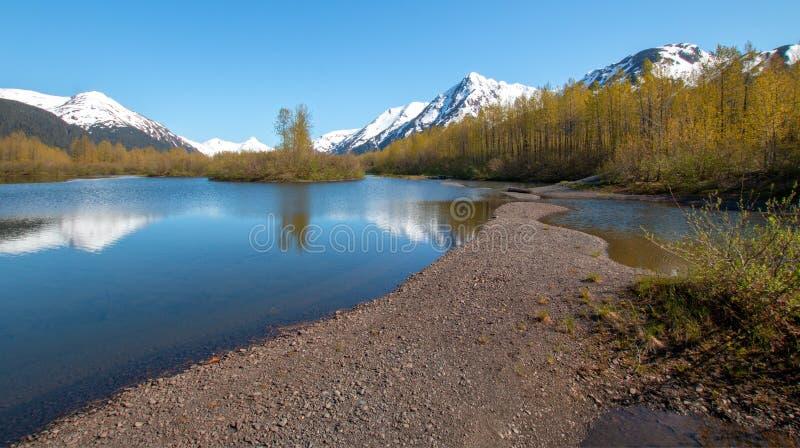 Älgen sänker våtmark och Portage liten vik i den Turnagain armen nära ankringen Alaska USA arkivfoto