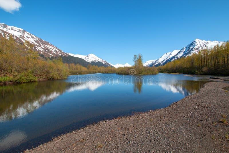 Älgen sänker våtmark och Portage liten vik i den Turnagain armen nära ankringen Alaska USA royaltyfria bilder