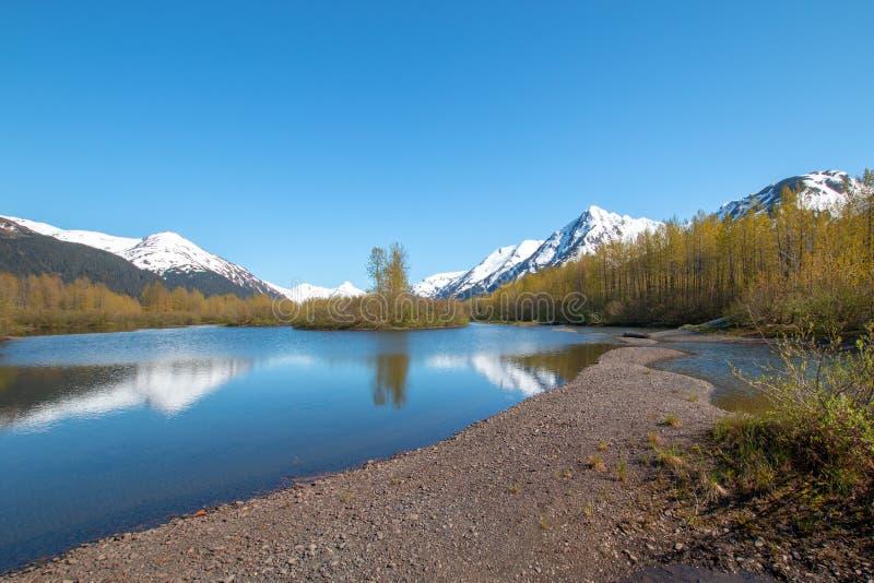 Älgen sänker våtmark och Portage liten vik i den Turnagain armen nära ankringen Alaska USA royaltyfria foton