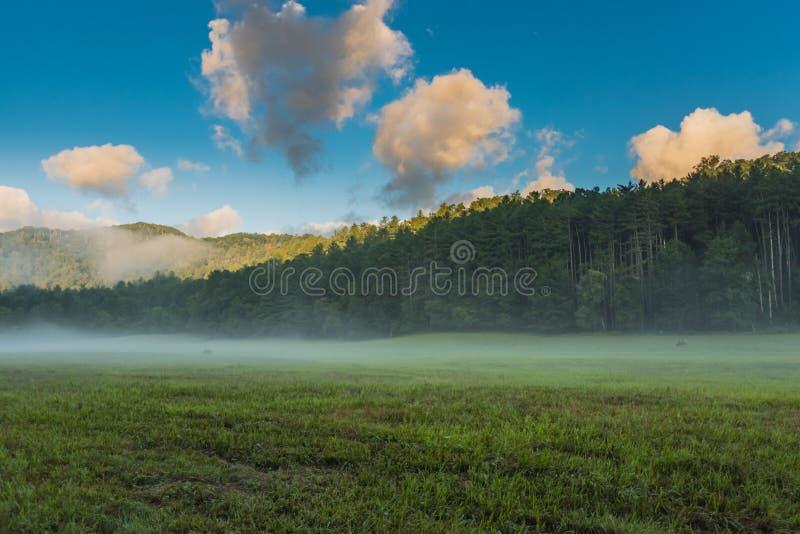 Älgen som betar i den dimmiga dalen som solljus, överträffar träden arkivfoto
