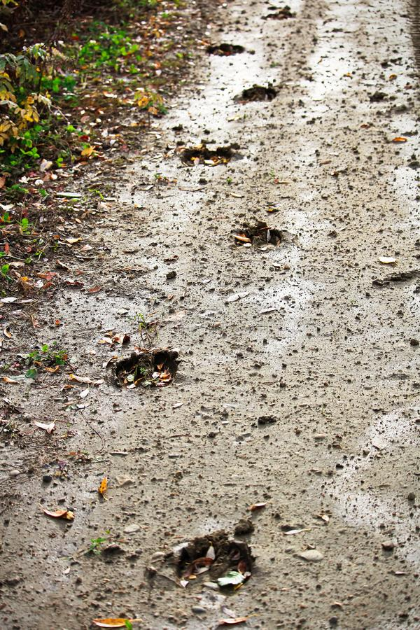Älgspår längs sidan av en lerig väg arkivbilder