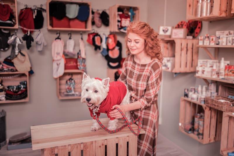 Älska den rödhåriga ägaren av den gulliga lilla hunden som ser honom royaltyfri fotografi