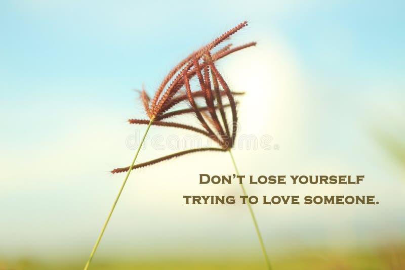 Älska inspirerande motiverande ord - Förlora inte dig själv när du försöker älska någon Med gräblommor i blå himmelbakgrund fotografering för bildbyråer