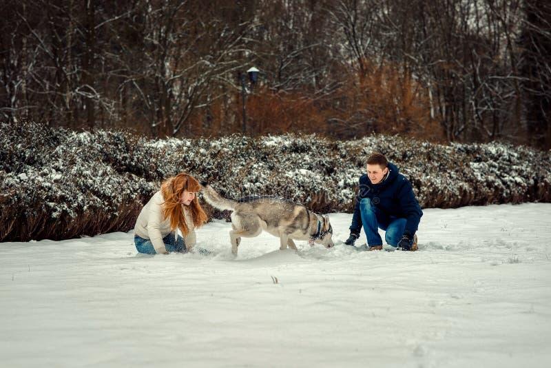 Älska par som spelar SiberianHusky Snow Forest Fun Horizontal lyckligt snöig le royaltyfri fotografi