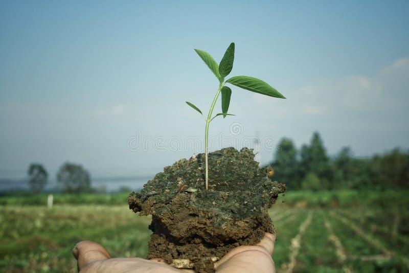 Älska världen sammanfogar händer för att plantera träd för vår planet arkivfoton