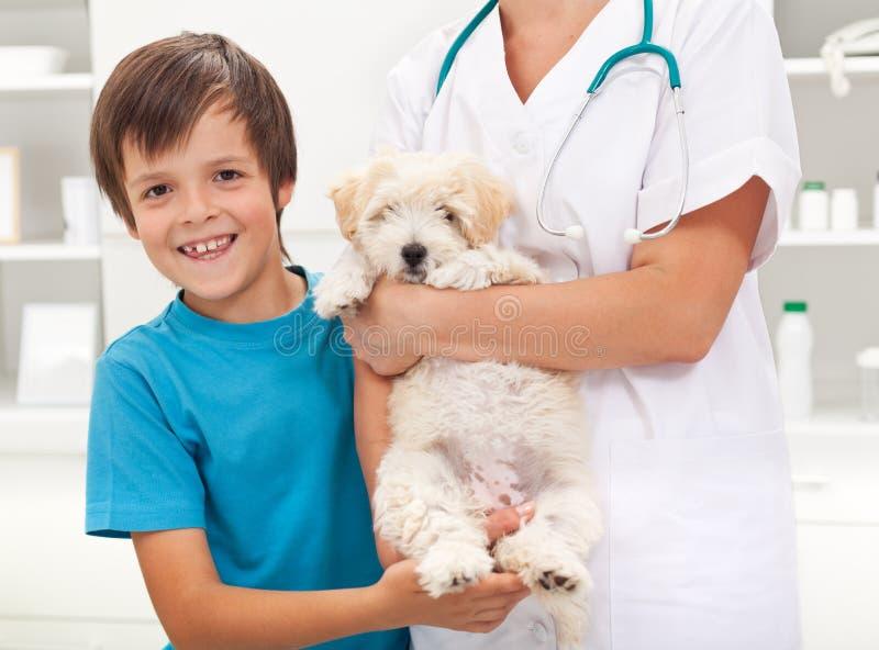 älskad pojkehund hans vet arkivbild