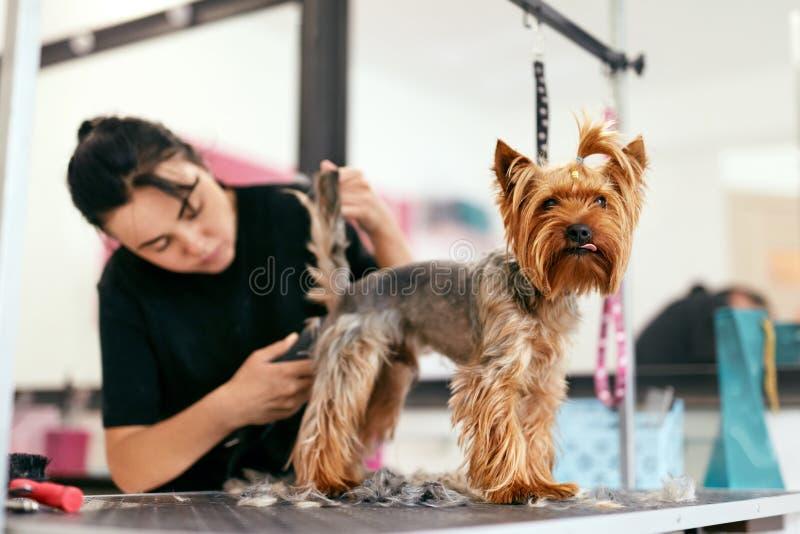 Älsklings- ansasalong Hund som får hår klippt på den djura Spa salongen royaltyfri foto