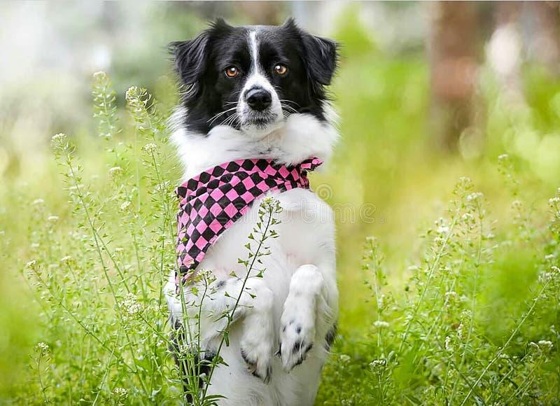 Älsklings- djur; gullig hund royaltyfri foto