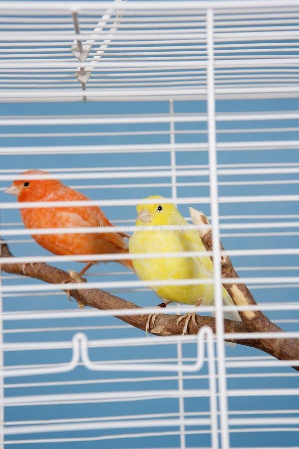 Älsklings- fåglar royaltyfria bilder