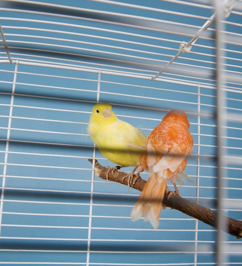 Älsklings- fåglar arkivfoton