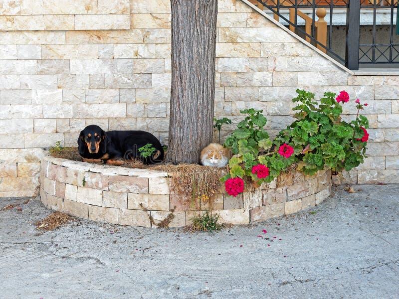 Älsklings- katt och hund som vilar utanför stenhus fotografering för bildbyråer