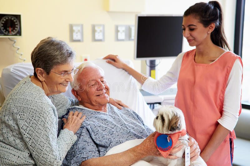 Älsklings- terapihund som besöker den höga manliga patienten i sjukhus royaltyfri foto