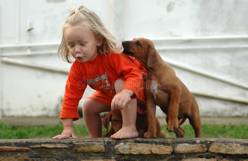 älsklings- valp för barn royaltyfri bild