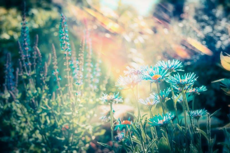 Älskvärd blommaträdgård med att blomma, utomhus- natur arkivfoton