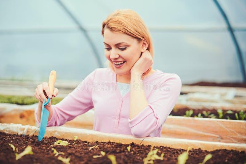 Älskvärd blond dam som gräver det lilla hålet i växtask Kvinnlig blomsterhandlare i rosa koftaarbete i växthus Eco arbeta i trädg royaltyfri foto