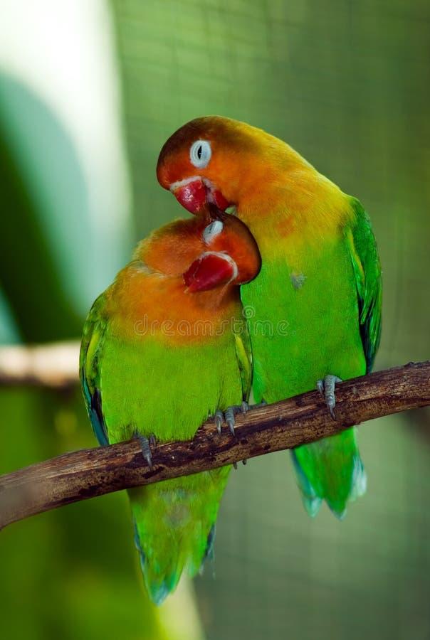 älskvärd fågel