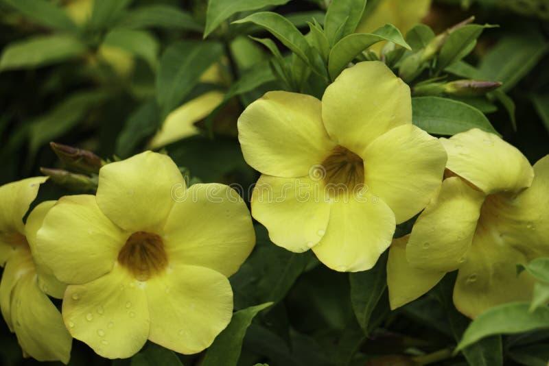 Älskvärd gul blomma i den gröna taköverkantträdgården royaltyfri fotografi