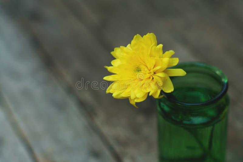 Älskvärd gul blomningkrysantemum i vas på trätabellen med vit väggbakgrund, stillebenbegrepp arkivfoton