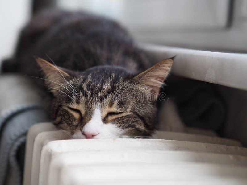 Älskvärd gullig katt som sover royaltyfria foton