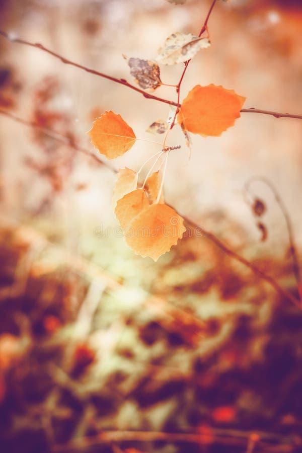 Älskvärd höstnaturbakgrund med gulingsidor, utomhus- nedgång royaltyfri fotografi