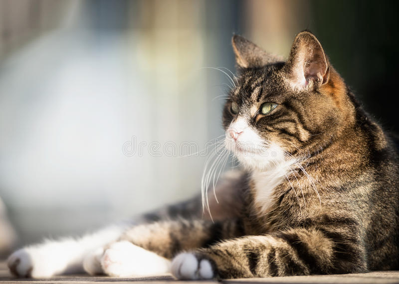 Älskvärd kattstående på den utomhus- naturen arkivbilder