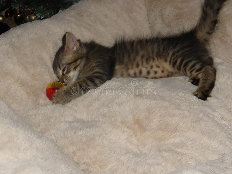 älskvärd kattunge arkivfoton