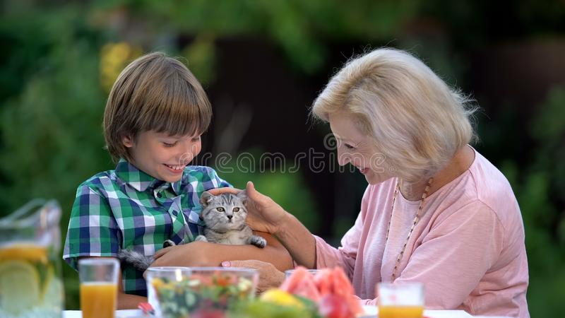 Älskvärd kattunge för sonsonvisningfarmor som kramar det gulliga husdjuret, ny familjemedlem arkivbilder