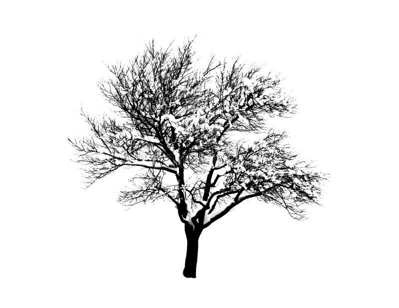 älskvärd silhouettetree stock illustrationer