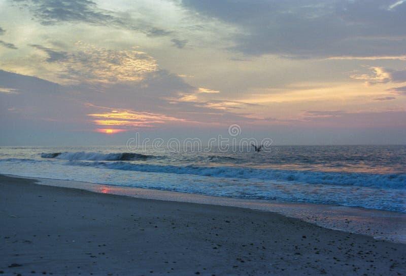 Älskvärd soluppgång över stranden med fågeln arkivfoto
