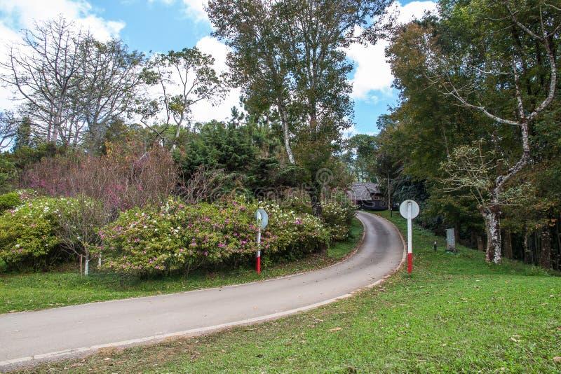 Älskvärd trädgård, trädgårds- landskap skönhet för offentlig vår fotografering för bildbyråer