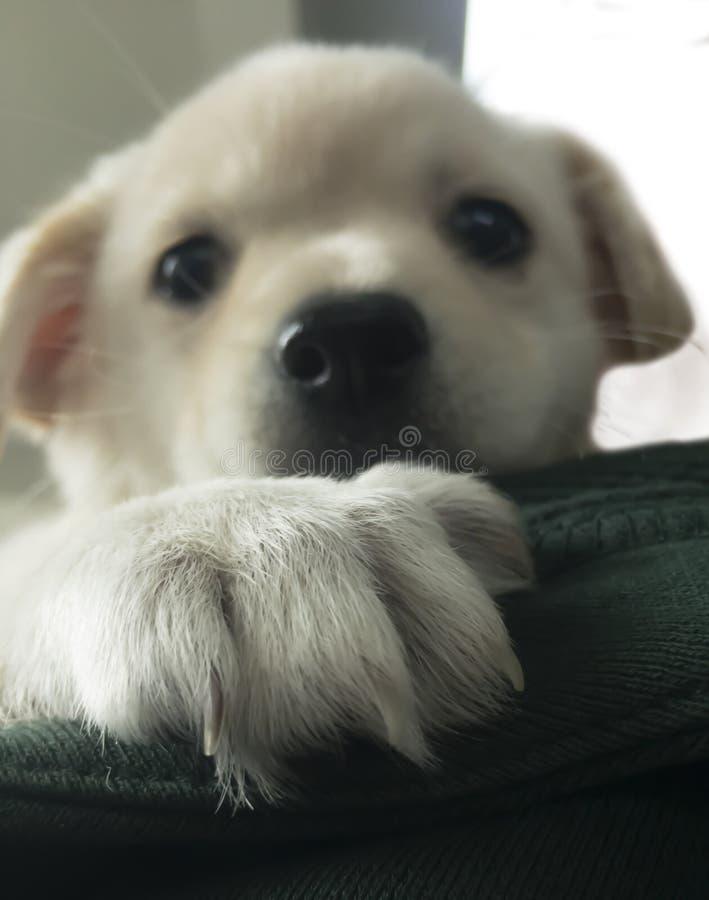Älskvärd vit hund arkivfoton