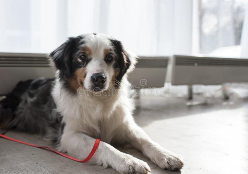 Älskvärda djur på hundshowen fotografering för bildbyråer