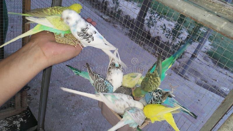 Älskvärda härliga papegojor arkivfoto