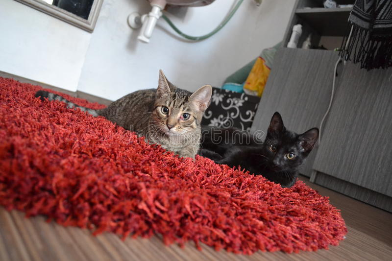 älskvärda katter arkivbild