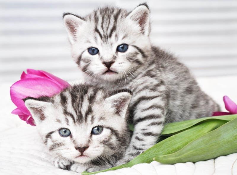 Älskvärda kattungar med blommor arkivbilder